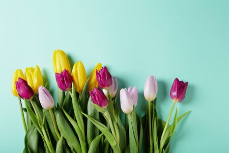 spring tulips on pastel blue background, flowers