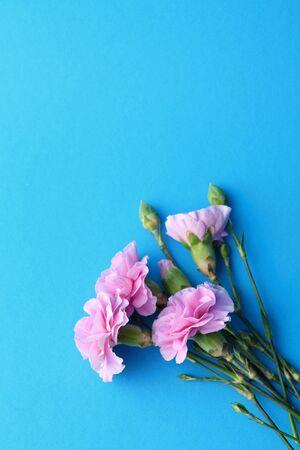 Blue flowers background, carnation Stock Photo