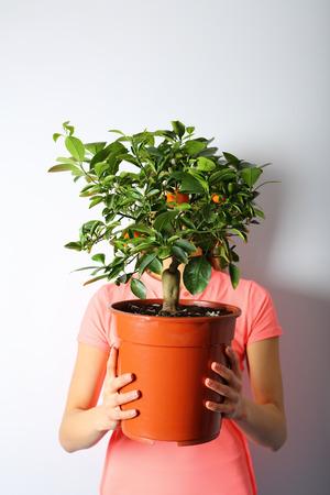 plant pots: Mandarin tree in a pot, in female hands