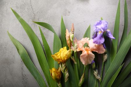 Colorful iris flowers on gray concrete background Stock Photo