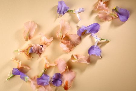 Holiday flowers background Stock Photo
