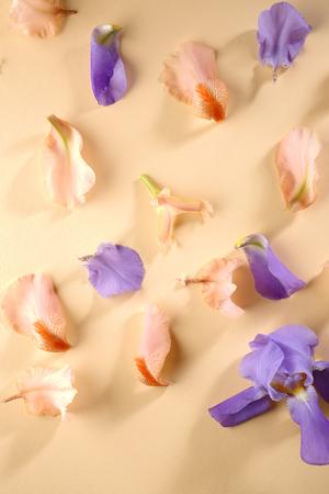 Flowers petals flat lay Stock Photo