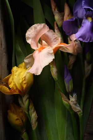 Dark flowers background, top view