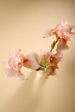 Three iris flowers above Stock Photo