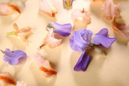 Blossom iris flowers background