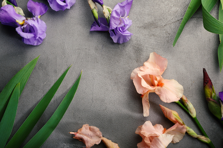Concrete background with iris blossom top view Stock Photo