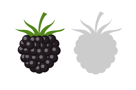 Vector Illustration berry Of blackberry