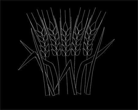 ripe spikelets and grains of wheat composition on black background. Delicious and healthy dinner. Elements for label design. Vector illustration. Cereals ingredients in triangulation technique.