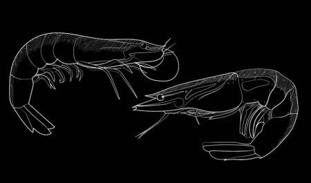 Hand drawn sketch shrimp illustration on the blackboard. Seafood vector Çizim