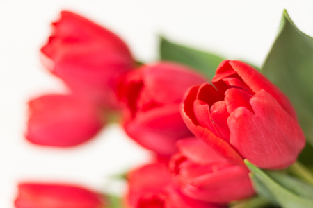 Large bouquet of pink tulips on white background. Selective focus. Defocused, blurred backdrop