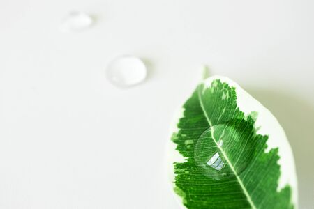 Transparent cosmetic geldrop on plant leaf with selective focus. Concept natural organic skincare product