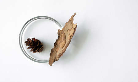 Pine cone and bark in glass petri dish on white background with copy space, top view. Concept science laboratory flat lay. Natural extract