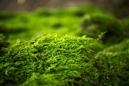Moss in forest with selective focus. Nature horizontal background wallpaper. Macro natural green texture