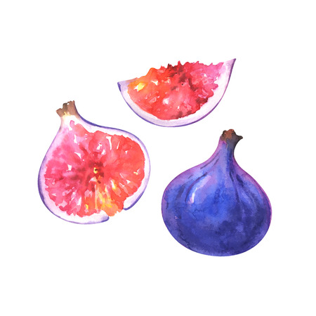 Hand painted watercolor whole and slices of fig isolated on white background. Fruits illustration Standard-Bild - 115455759