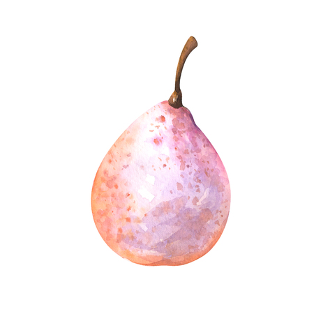 hand painted watercolor illustration of nashi pear isolated on white background Standard-Bild - 118965884
