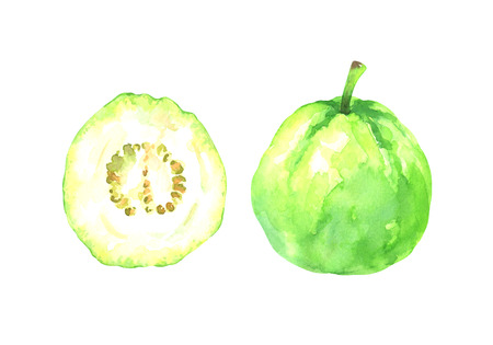 hand painted watercolor illustration of a slice and whole guava isolated on white background Standard-Bild - 118965890