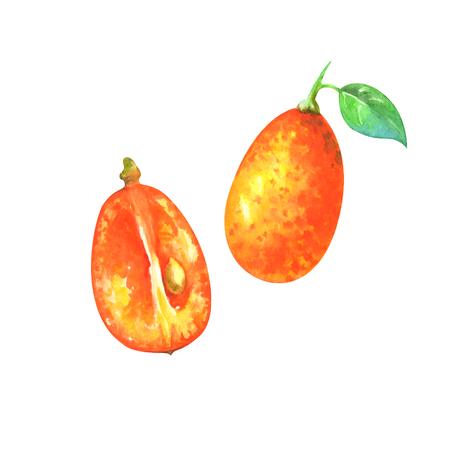 watercolor illustration of kumquat Standard-Bild - 118965901