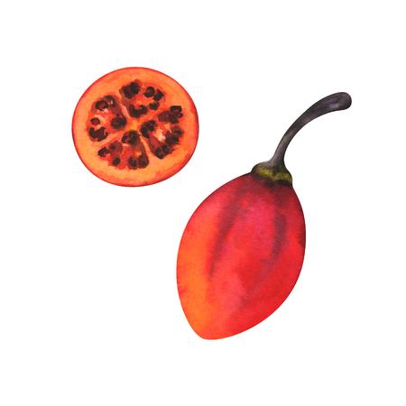 watercolor illustration of tamarillo Standard-Bild - 118965920