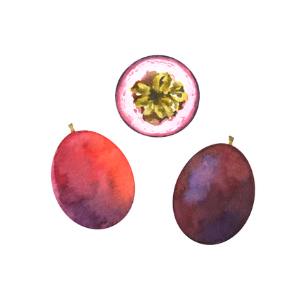 watercolor illustration of passion fruit Standard-Bild - 118965923