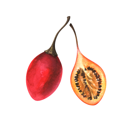 watercolor illustration of tamarillo Standard-Bild - 118965924