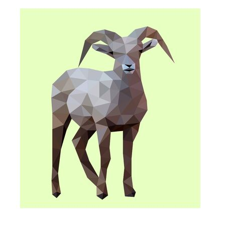 Low poly illustration of sheep