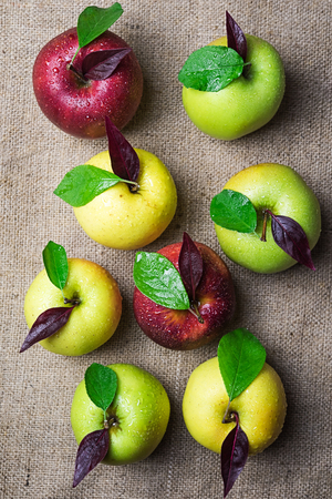Top view of group of eight colorful yellow, red and green apples with water drops and green and purple leaves on brown rough sacking material background
