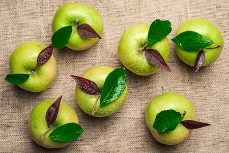 Top view of group of seven colorful green apples with water drops and green and purple leaves on brown rough sacking material background
