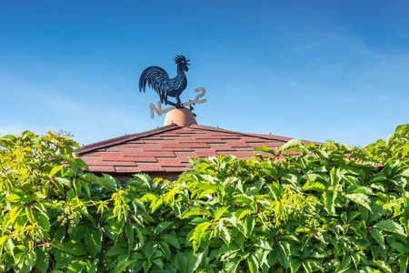Black and blue metal weathercock on roof with green wall of wild vine foliage and blue sky unfocused background