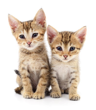 Two small kittens isolated on white background.