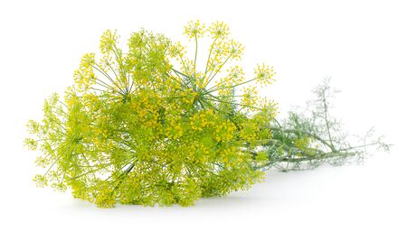Branch of fresh green dill isolated on white background.