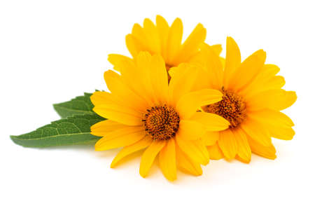 Three yellow flowers on a white background.