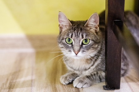 Striped cat sits and watches on the floor. The concept of pets.