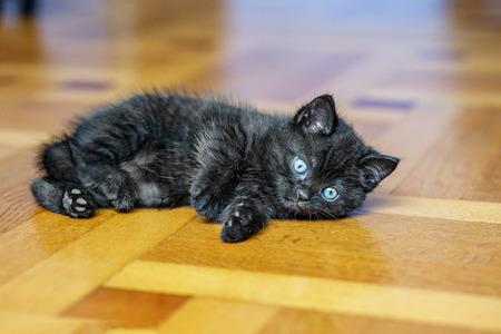 Little black kitten is lying on the wooden floor. Pets concept 写真素材