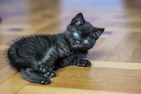 A little black kitten is lying on the floor. Pets concept