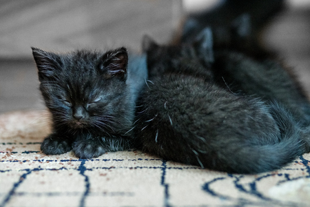 Little black kittens sleep on the floor. Pets concept 写真素材