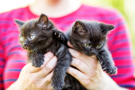 Two black kittens in the hands of man. Pets concept