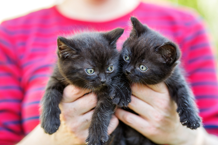 Two black kittens in the hands of a woman. Pets concept 写真素材