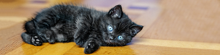 Black kitten on the floor. Banner for the site. Pets concept. 写真素材
