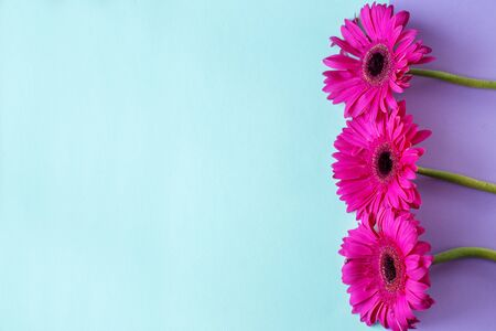 Flower composition. Creative layout made of pink Gerbera. Close up. Hello spring concept. Minimal style, flat lay. Text space.