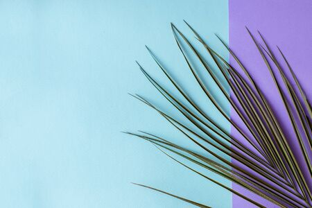 Tropical palm leaves on a purple and blue background. Minimal nature. Summer in style Фото со стока