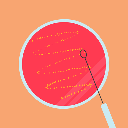 Petri dish with agar, bacteria and inoculation loop, vector illustration in flat style isolated on the background.. Eps10