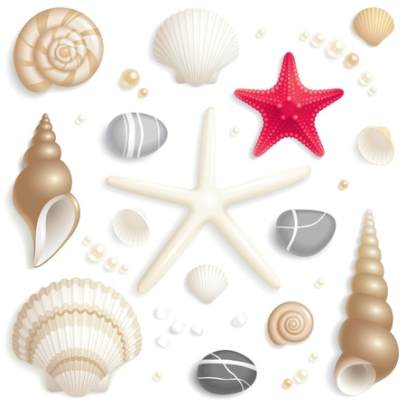 sea shells on beach: Set of seashells, starfishes and pebbles