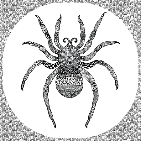 isolated illustartion: Coloring Page of Black Spider with Hand Drawn Patterns, Illustartion Tribal Totem Insect for Adult Coloring Books or Tattoos, Isolated on Background. Monochrome Sketch.