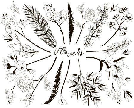 Collection d'éléments de design floral. Branches et fleurs dessinés à la main. Illustration vectorielle décorative. Fleur de Lys, Fleur de cerisier, Calla, Orchidée, Pivoine, Feuille de fougère, Feuilles de bambou, Banque d'images - 92243236