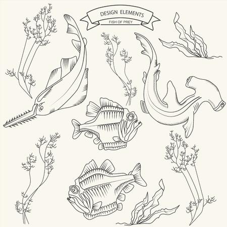 sea saw: Fish of prey underwater theme vector illustration