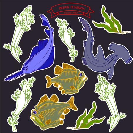 sea saw: Fish of prey underwater theme illustration