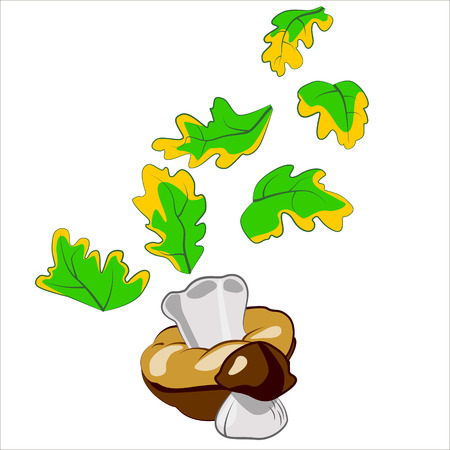 edible: Vector isolated illustration, cute edible mushrooms.