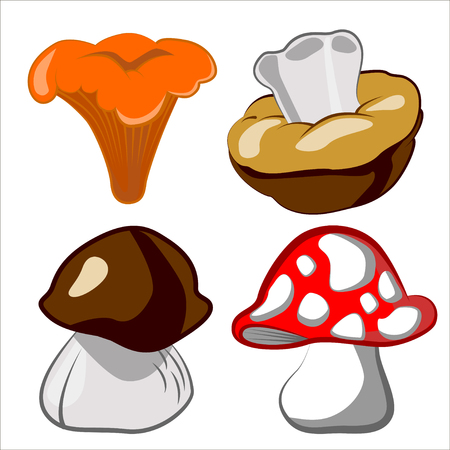 cep: Vector cartoon illustration of mushrooms.