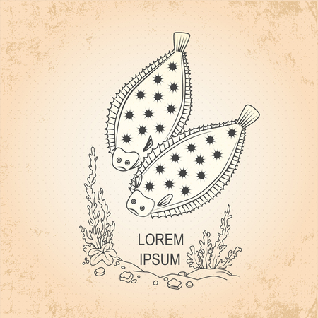 flounder: Vintage sea background. Hand drawn sketch seafood vector illustration of  fish shovel. It is shovel fish.
