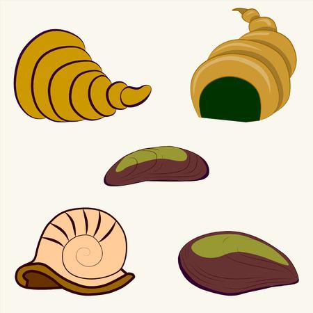 molluscs: Shellfish cartoon illustration. Illustration